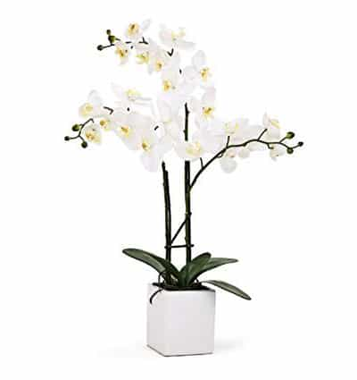 potted white orchid 03 branches
