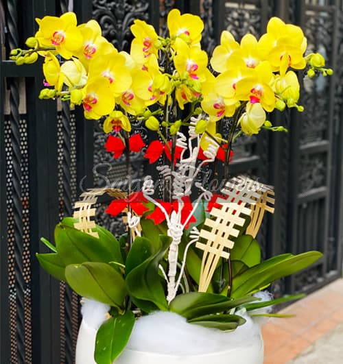 potted-yellow-orchid-06-branches