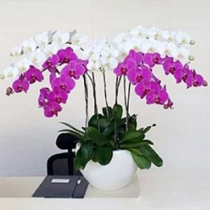 special potted orchids 01