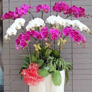 special potted orchids 06