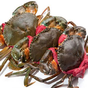 Fresh Sea Crab