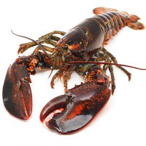 fresh-lobster