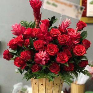 christmas-roses-29