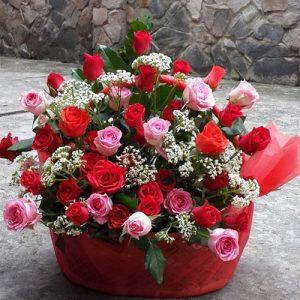 christmas-roses-31
