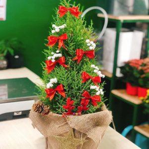 christmas-tree-17