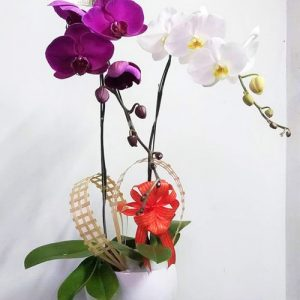 potted-orchids-christmas-05