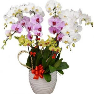 potted-orchids-christmas-16