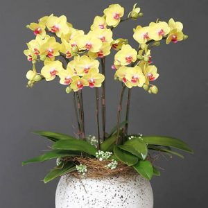 potted-orchids-christmas-17