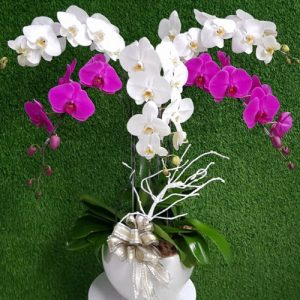 potted-orchids-christmas-18