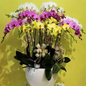 potted-orchids-christmas-19