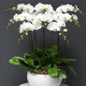 potted-orchids-christmas-20