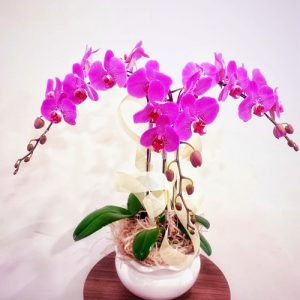 poted-orchids-for-tet-15