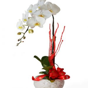 poted-orchids-for-tet-02