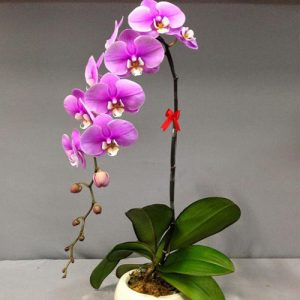 poted-orchids-for-tet-11