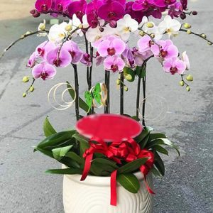 poted-orchids-for-tet-12