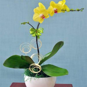 poted-orchids-for-tet-14