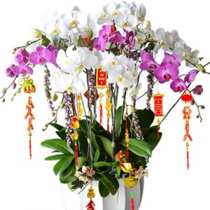 poted-orchids-for-tet-17