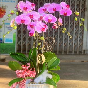 poted-orchids-for-tet-19
