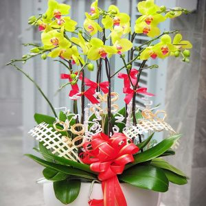 special-orchids-for-tet-06