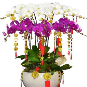 special-orchids-for-tet-10